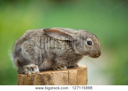 Portrait of cute baby rabbit bunny on stud agaist green bokeh background