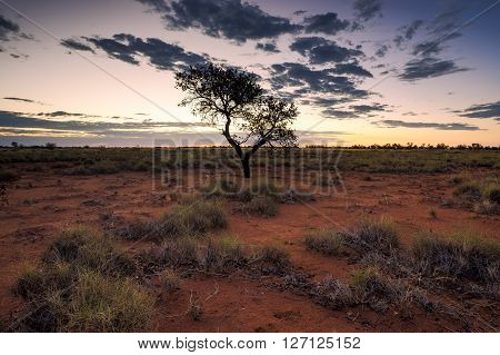 A single tree in the centre of frame during a typical Australian outback sunset.