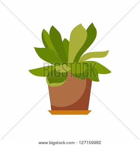 House plant isolated. Vector flat house plant pot illustration. Concept of flat home plant pot. Colorful house plant in pot for your design. Home plant icon