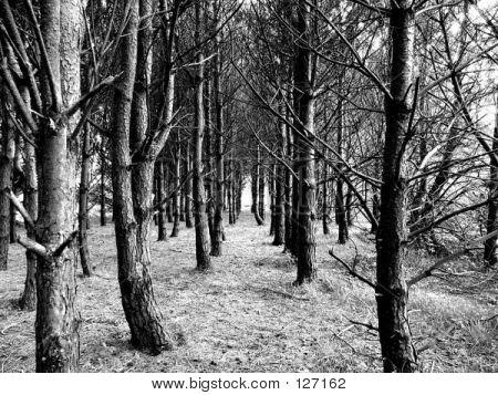 Black & White Wood