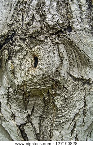 The bark on old wood carved with age.