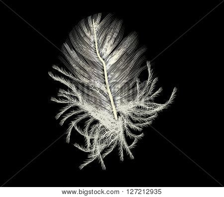 illustration with single feather silhouette isolated on black background