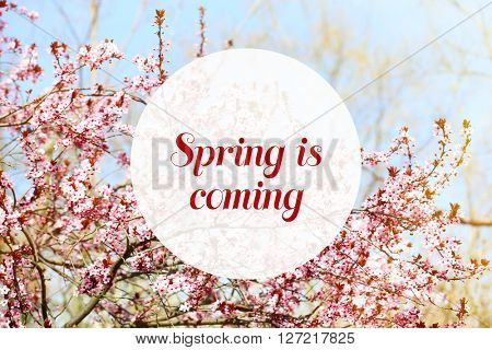 Cherry blossoms with lettering Spring is coming