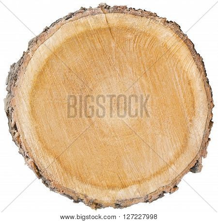 wood cut cross section showing age of organic tree