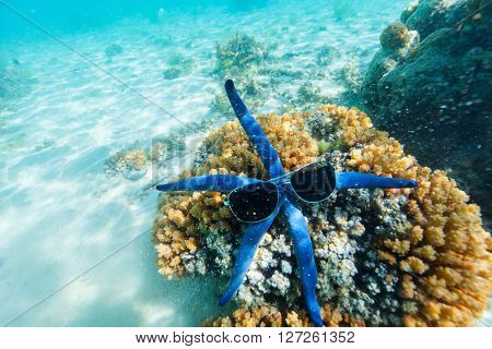 Underwater photo of blue star fish with sun glasses at tropical coral reef