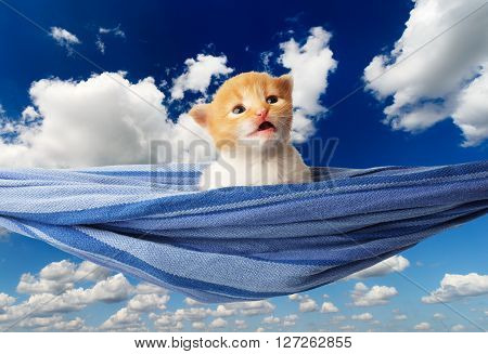 Red kitten in a hammock. Surprised Cute orange kitten in a blue hammock having rest, relax at blue sky background. Adorable sad pet. Small heartwarming kitten. Little cat. Animal isolated. High key