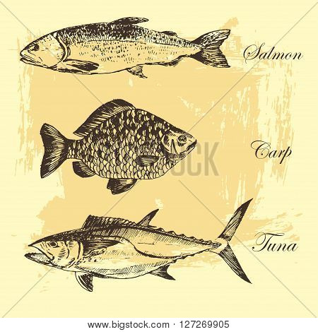 vector fish sketch drawing - salmon, trout, carp, tuna. hand drawn sea food illustrations