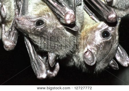 Bats Hanging Out In Cave