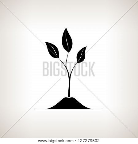 Sprout , a Young Shoot on a Light Background, Plant Shoot Growing Up out of the Land, Black and White Vector Illustration