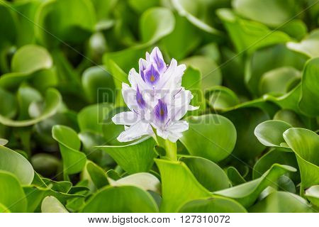 Flora found on the Naivasha lake (Kenya)