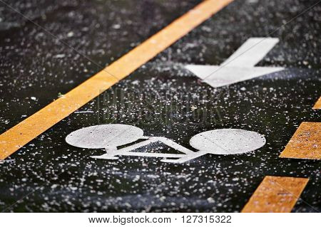 Rainfall on bicycle lanes in a park in springtime ** Note: Shallow depth of field