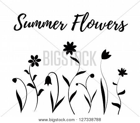Summer flowers in black and white, vector illustration isolated on white