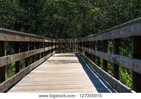 Wooden Boardwalk In Florida