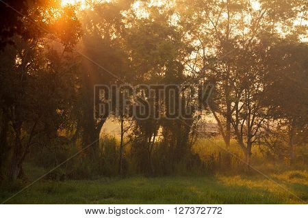 Beautiful Morning Sunlight Through A Tree