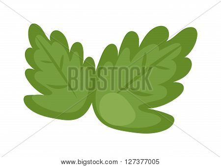 Fresh green lettuce isolated on a white, food fresh salad vegetable nutrition vector. Cartoon vegetable lettuce and green fresh lettuce. Lettuce diet ingredient and nature agriculture health vitamin.