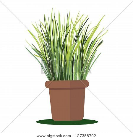 Vector illustration plant in pot. Grass in pot isolated on white background