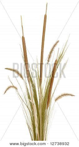 Grass Arrangement