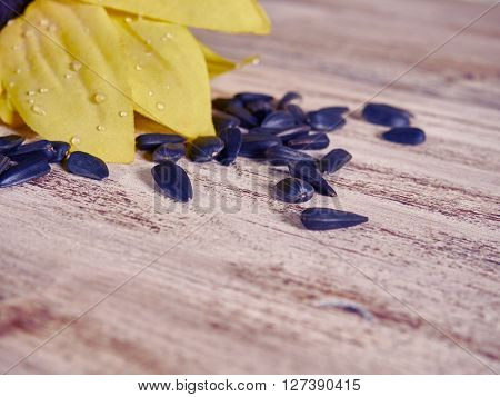 sunflower sunflower seeds on wooden background. selective focus