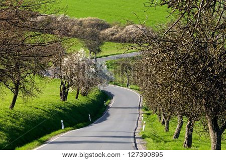 Road With Alley Of Trees