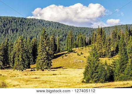 Coniferous Forest On A Mountain Hillside