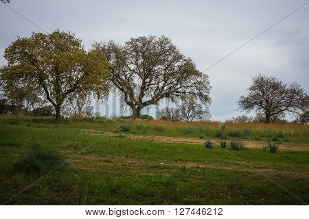 Scenic landscape with trees at Mount Filerimos on Rodos island in Greece