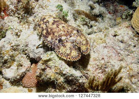 sea coral life underwater picture Cuba caribbean sea