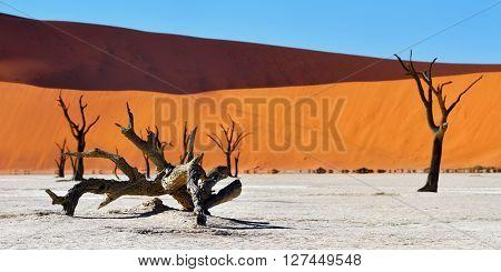 Namib-naukluft National Park, Namibia, Africa.