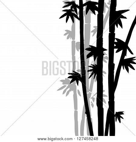 monochrome  bamboo grove, fresh bamboo stalks, bamboo forest, hand drawn vector illustration