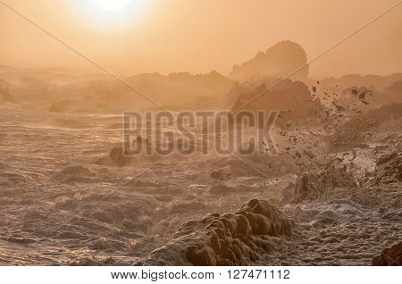 Spume in the setting sun caused by the stormy sea whipping up the seawater into a milky substance when it contains high concentrations of dissolved organic matter
