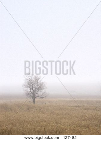Single Lone Tree On A Foggy Day