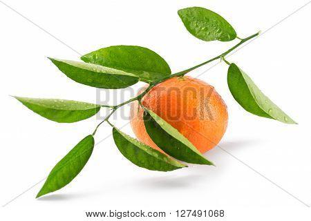 Mandarin Orange (tangerine) Isolated On White Background