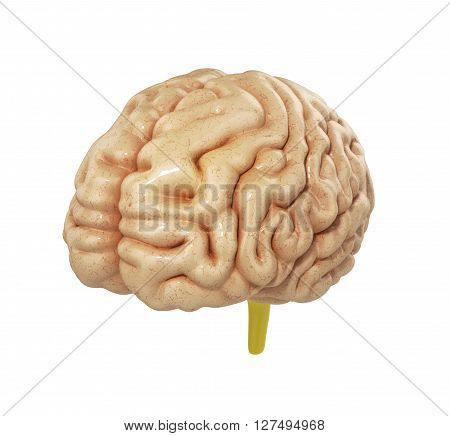 Medically Accurate Illustration Of The Brain 3D Render