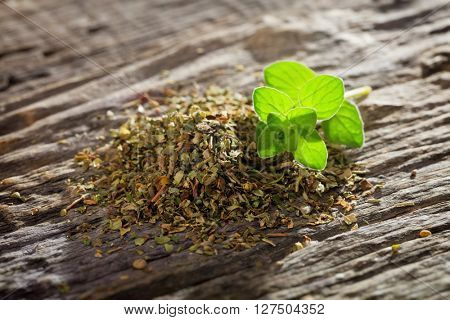Branch of fresh origanum with heap of dry origanum on wooden table