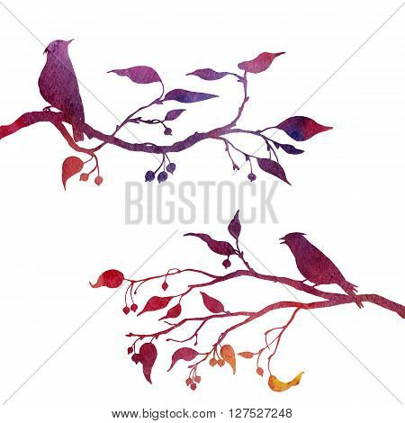 silhouettes of birds at tree drawing in watercolor, hand drawn waxwings at branches of wild apple tree, hand drawn illustration