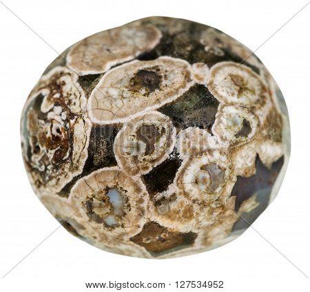 Ball From Madagascar Rhyolite (turritella Agate)