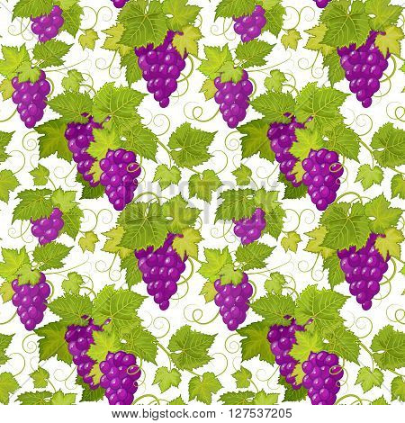 Grapes seamless background. Vector pattern. Vector grapes background illustration. Seamless texture with bunch of grapes. Grapes vine wallpaper isolated on white background