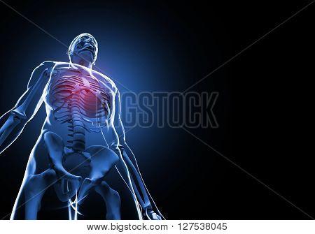 Male rib cage. 3D illustration of anatomy bones.