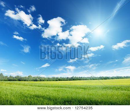 veld van haver en zonnige hemel