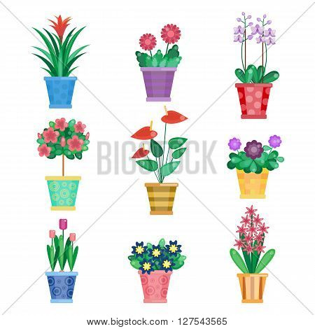 Set of houseplant, home interior flowers and office plants in pot. Tulip and viola, gerbera and orchids.  Summer spring collection. Flat flowers set. Houseplants vector illustration