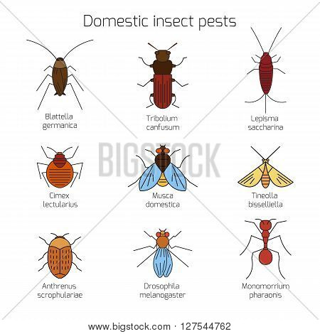Set of domestic insect pests pests. Thin line symbols of bug. Geometrical design element isolated on white background. Mole and cockroach, mealworm and carpet beetle, ant and drozofilla