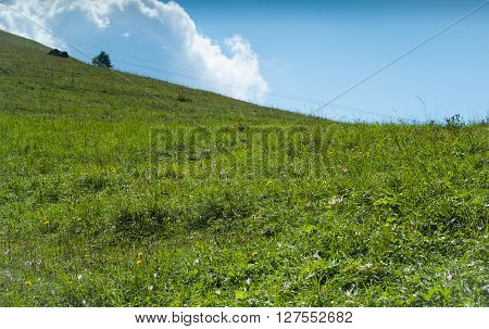 a green field full of grass and flowers photographed at Piani d'Erna (part of the Alps) near Lake Como in Italy
