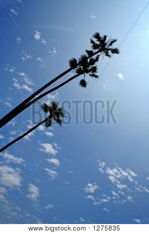 Palm Trees On Sunny Day