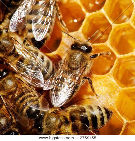 Macro of working bee on honeycells.