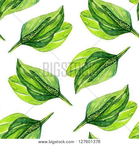 watercolor plantain Botanical pattern on a white background
