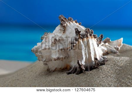 Macro shot sea snail on the beach in front of an azure sea and horizon