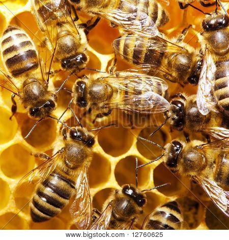 poster of Macro of working bee on honeycells.