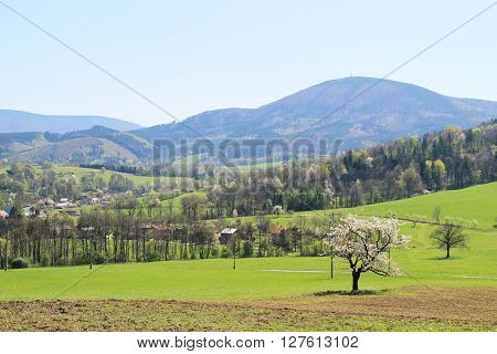 Landscape of beskydy mountains in spring with blooming cherry tree at the foreground