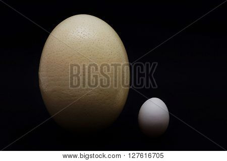 Big ostrich egg and a small hen's egg