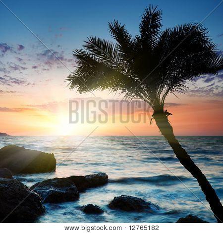Beautiful sunset at tropical beach. Crimea. Ukraine.