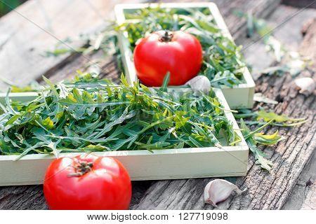 Fresh organic salad - raw salad (eruca sativa, eruca, arugula, rucola, ruccola)
